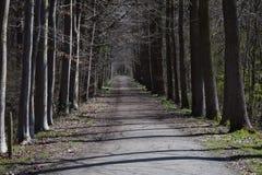 pasage δέντρων Στοκ εικόνες με δικαίωμα ελεύθερης χρήσης