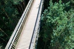 Pasarela de madera que cruza arriba para arriba sobre un bosque Foto de archivo libre de regalías