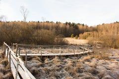 Pasarela de madera sobre pantano congelado Paisaje del invierno Foto de archivo