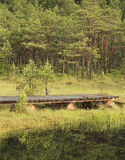 Pasarela en bosque fotografía de archivo