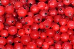 Pasas rojas Foto de archivo libre de regalías