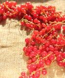 Pasas rojas Imagen de archivo libre de regalías