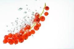 Pasas rojas en un agua Imágenes de archivo libres de regalías