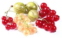 Pasas y grosella espinosa rojas, blancas frescas Imagen de archivo libre de regalías