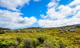 Pascendo nelle colline intorno a Carrick Fotografie Stock Libere da Diritti