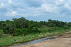 Pascendo sull'erba sulla sponda del fiume Fotografie Stock Libere da Diritti
