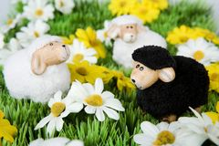 Paschal lamb on a meadow Stock Images