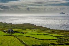 Pascoli alla costa dell'Irlanda Fotografia Stock Libera da Diritti