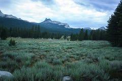 Pascoli blu freddi in parco nazionale di Yosemite con il monolito del granito nei precedenti Immagine Stock