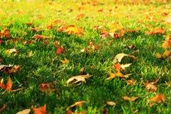 Pascoli d'autunno Immagini Stock Libere da Diritti