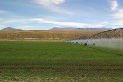Pascoli d'irrigazione Fotografia Stock