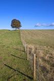 Pascoli del bestiame Fotografia Stock