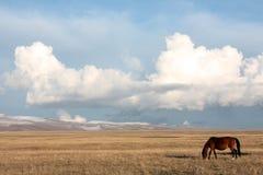 Pascoli del lago canzone-Kul, Kirghizistan Immagine Stock Libera da Diritti