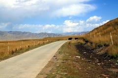 Pascoli dell'alta montagna, plateau tibetano, Cina Fotografie Stock