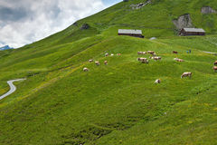 Pascoli dell'altopiano nelle alpi Immagine Stock Libera da Diritti