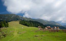 Pascoli della montagna Fotografia Stock