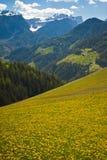 Pascoli della sorgente in montagne della dolomia dell'Italia Fotografia Stock