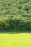 Pascoli e foresta Fotografia Stock