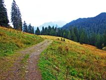 Pascoli e prati alpini nella regione di Obertoggenburg, Stein fotografie stock libere da diritti