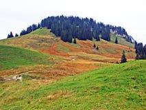 Pascoli e prati alpini nella regione di Obertoggenburg, Stein fotografia stock