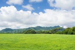 Pascoli hawaiani verdi Fotografia Stock