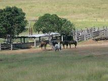 Pascoli il paesaggio con gli alberi e recinta l'Australia orientale Fotografie Stock Libere da Diritti