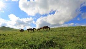 Pascoli in Mongolia Interna Cina immagini stock libere da diritti