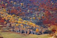 pascolo all'autunno fotografia stock libera da diritti