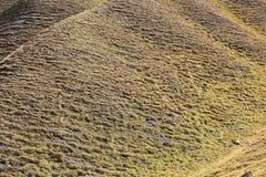 Pascolo alpino Immagini Stock Libere da Diritti