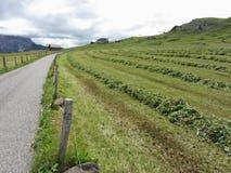 Pascolo alpino con i mucchi dei ritagli dell'erba Fotografia Stock