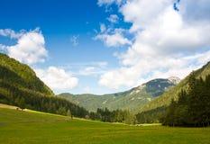 Pascolo alpino in primavera Immagine Stock Libera da Diritti