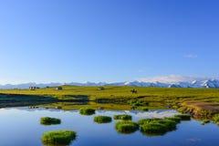 Pascolo con i laghi, la montagna della neve, le capanne ed il cavaliere del cavallo fotografia stock libera da diritti