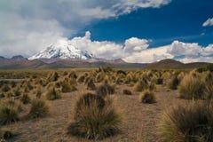 Pascolo con i vulcani Immagine Stock Libera da Diritti