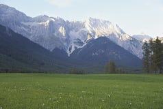 Pascolo davanti alle montagne Immagine Stock