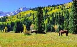 Pascolo dei cavalli nel paesaggio alpino durante la stagione di fogliame Fotografie Stock