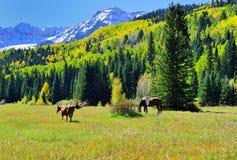 Pascolo dei cavalli nel paesaggio alpino durante la stagione di fogliame Fotografia Stock