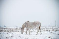 Pascolo del cavallo 2 Immagine Stock