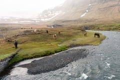Pascolo del cavallo dal fiume e montagne con foschia fotografia stock libera da diritti