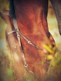 Pascolo del cavallo di baia a partire dalla caduta Fotografie Stock Libere da Diritti