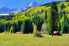 Pascolo del cavallo nel paesaggio alpino durante la stagione di fogliame Fotografia Stock Libera da Diritti