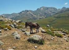 Pascolo del cavallo su un paesaggio della montagna fotografia stock libera da diritti