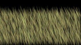 pascolo del colpo della brezza del vento 4k, fondo dell'orzo del grano del pascolo della prateria del prato illustrazione di stock