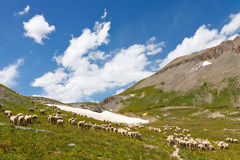 Pascolo del gregge delle pecore fotografie stock