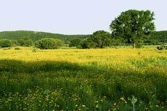 Pascolo del paese della collina del Texas Immagine Stock Libera da Diritti