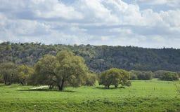 Pascolo del ranch in Texas Hill Country su un pomeriggio soleggiato Immagini Stock