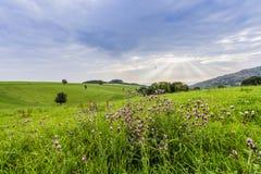 Pascolo della campagna e paesaggio Germania di agricoltura Immagine Stock Libera da Diritti