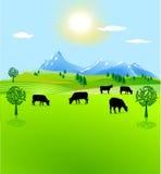 Pascolo della montagna del recinto chiuso della mucca Immagine Stock