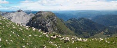 Pascolo della montagna in pendio di collina del sud della montagna di Krn in Julien Alps Fotografia Stock