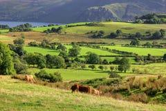 Pascolo della montagna, Regno Unito, Inghilterra Fotografia Stock Libera da Diritti