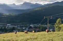 Pascolo della montagna sopra Bohinjska Bistrica con la montagna di Triglav nel parco nazionale di Triglav in Slovenia Immagini Stock